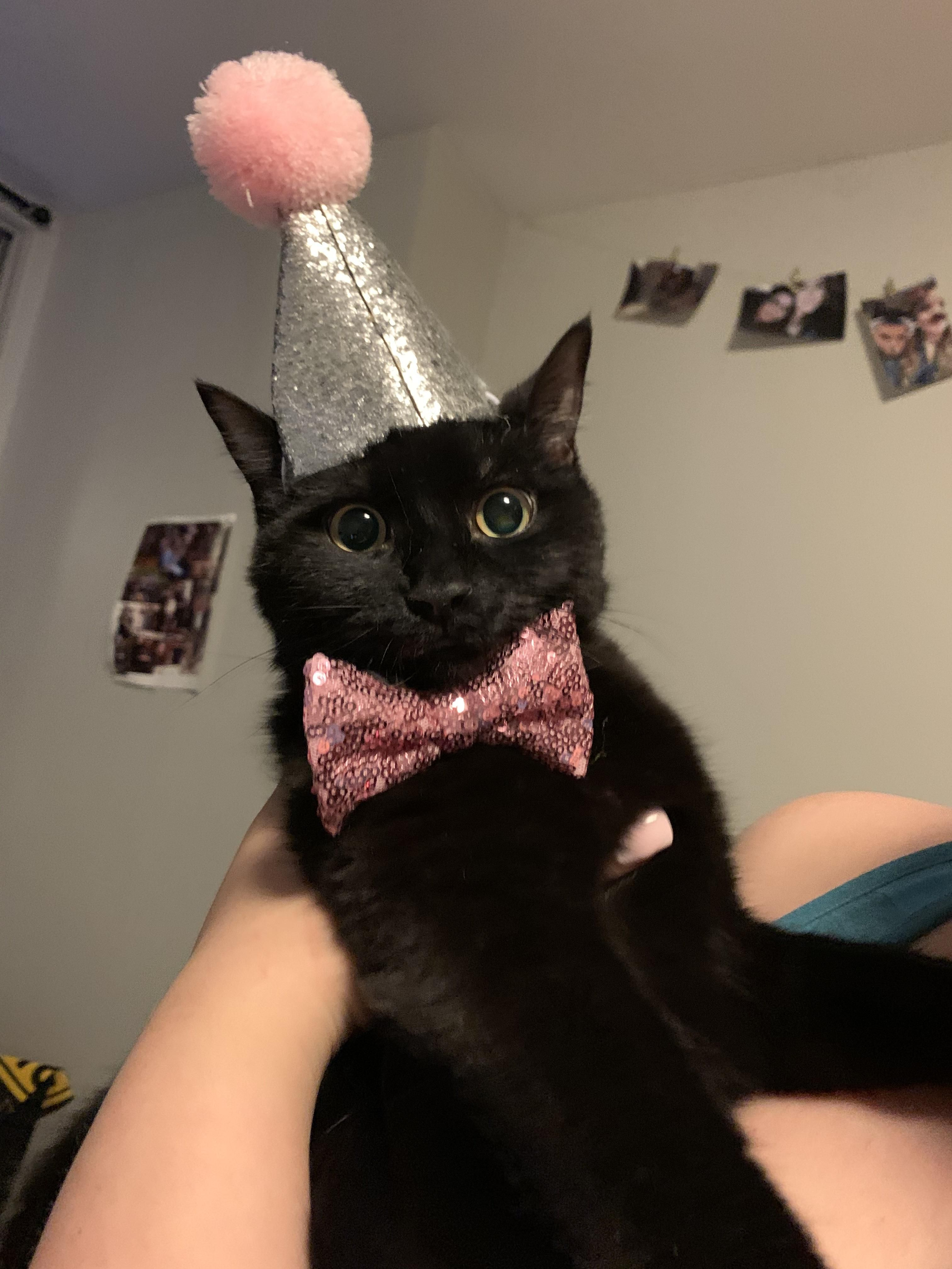 A Follow Up Kleo Had A Lovely Birthday Party We Made Kitten