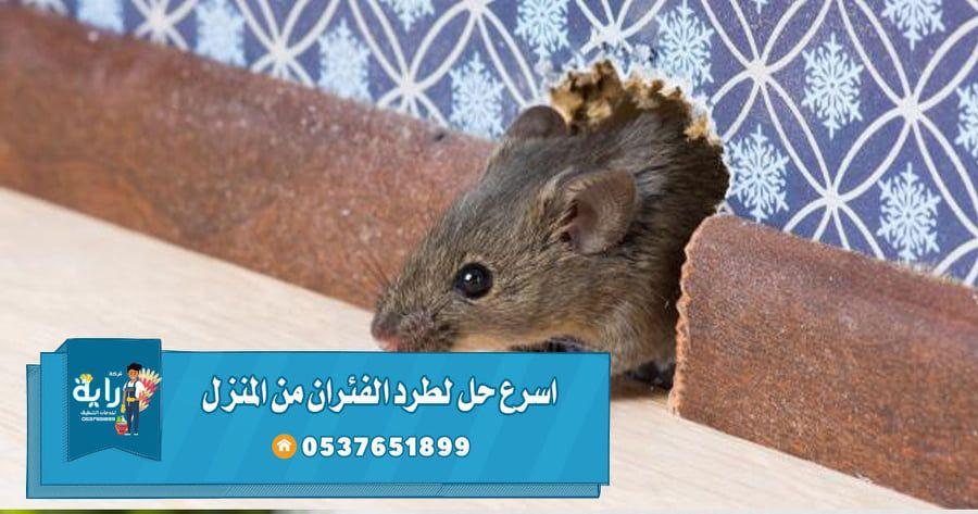 أسرع حل لطرد الفئران من المنزل وما هو سبب وجود الفئران في البيت Animals Hamster