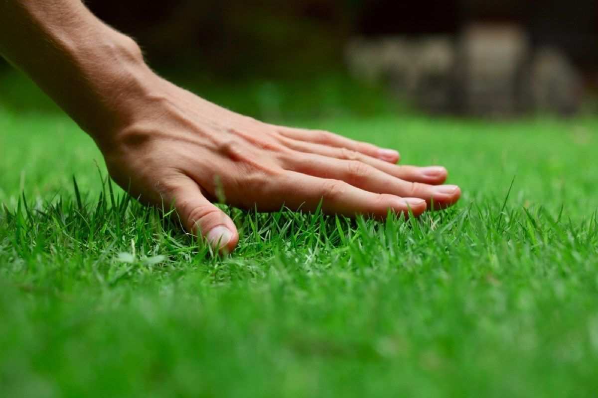 The Single Best Tip for a Perfect Lawn, According to a