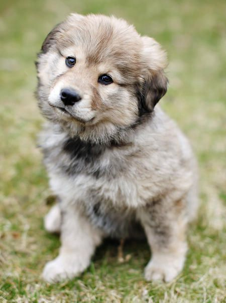 Layla The Mixed Breed With Images Dog Breeds Puppies Puppy