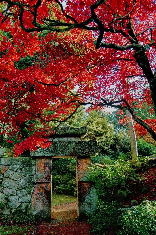 Jardin japones en inglaterra quiso el ingles sentirse for Jardines japoneses zen