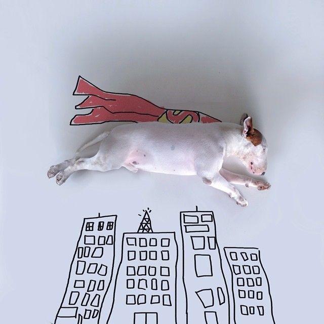 Creativa dueño del perro hace adorables imágenes de su Bull Terrier, Jimmy Choo