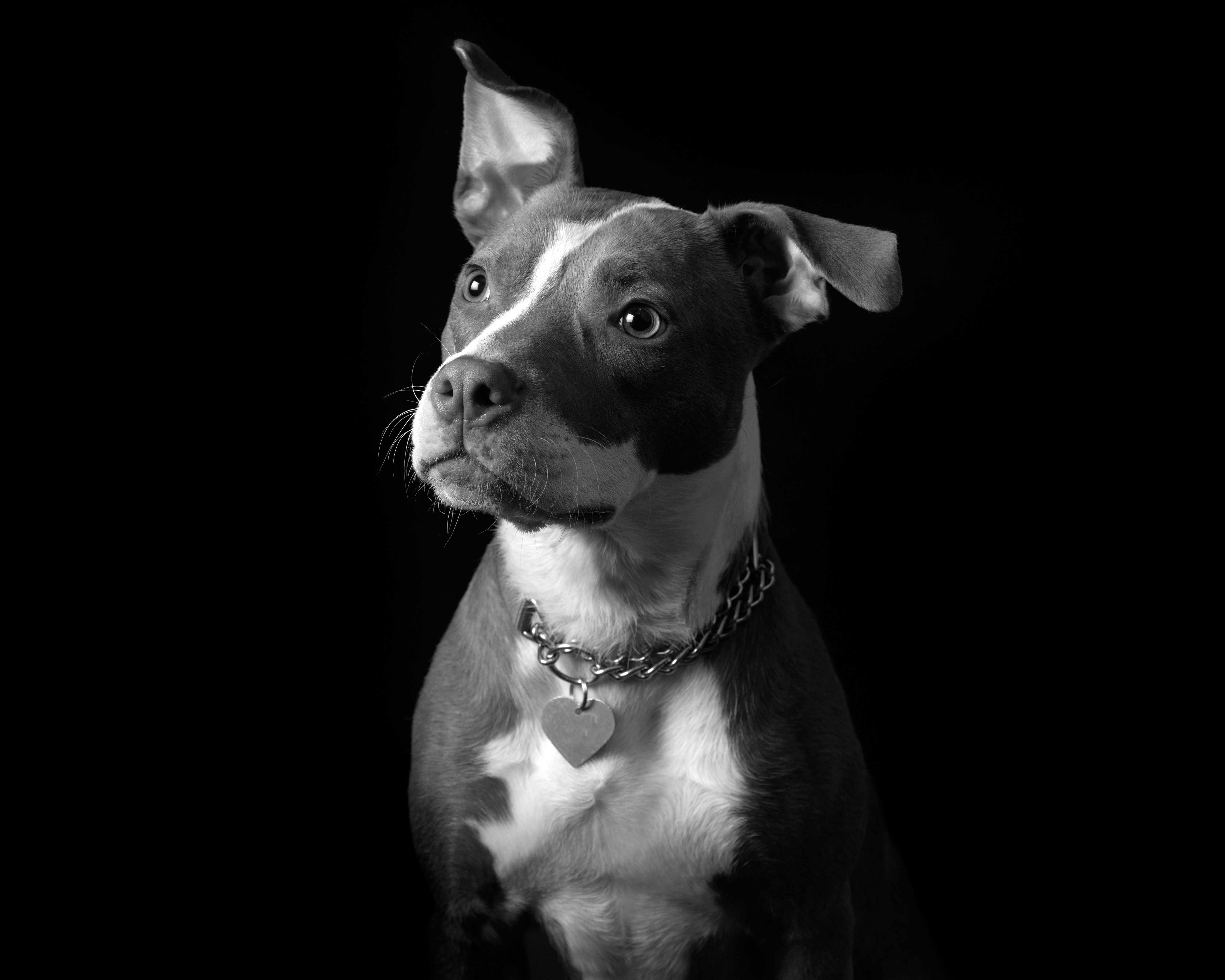 Intimate Mixed Breed Dog Puppy Dog Image Licensed