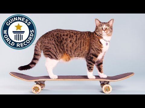 6 Greatest Guinness World Records Starring Cats Cattime Cat Hacks Kitten Rescue Cats