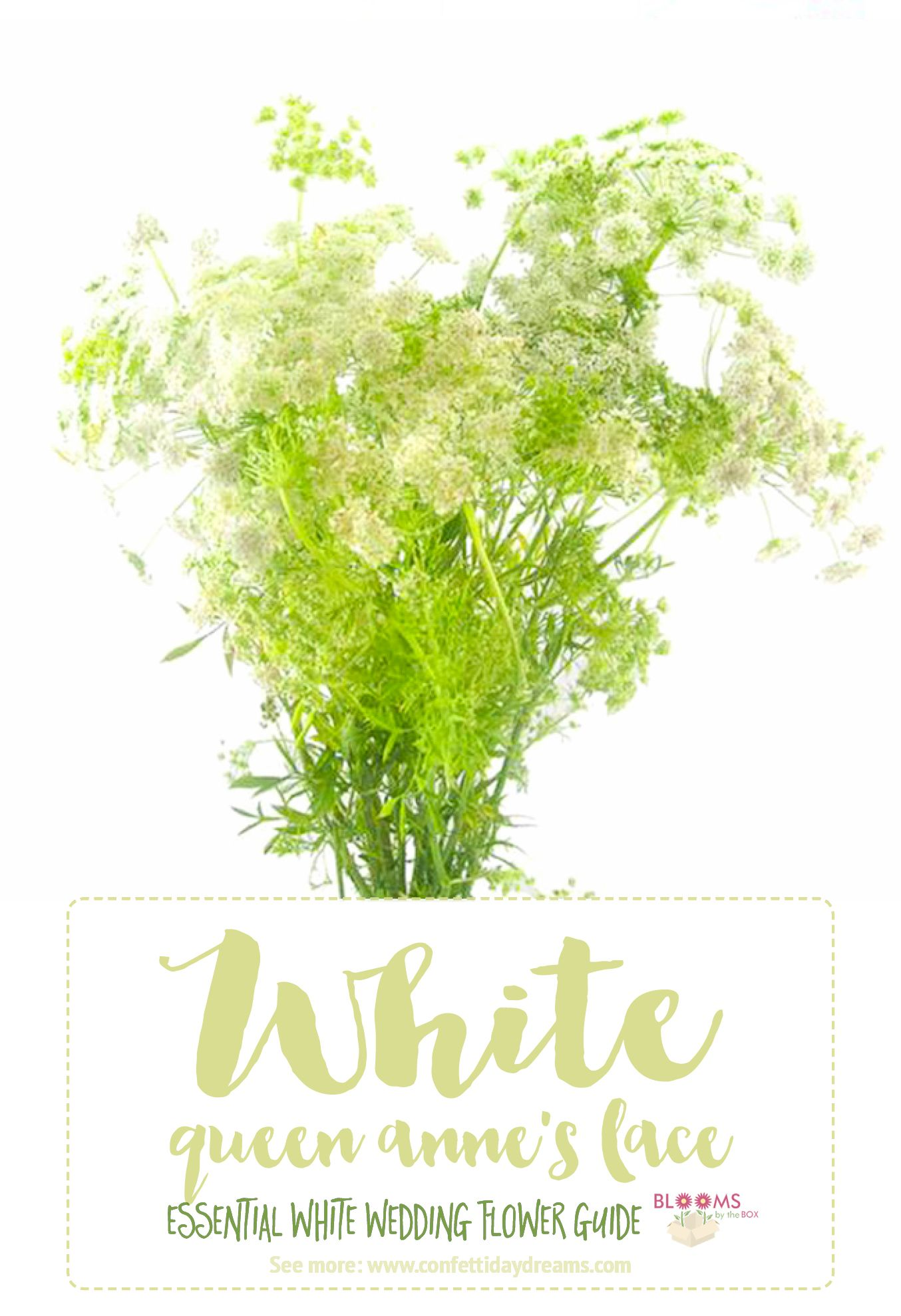 Essential White Wedding Flower Guide Names Types Pics