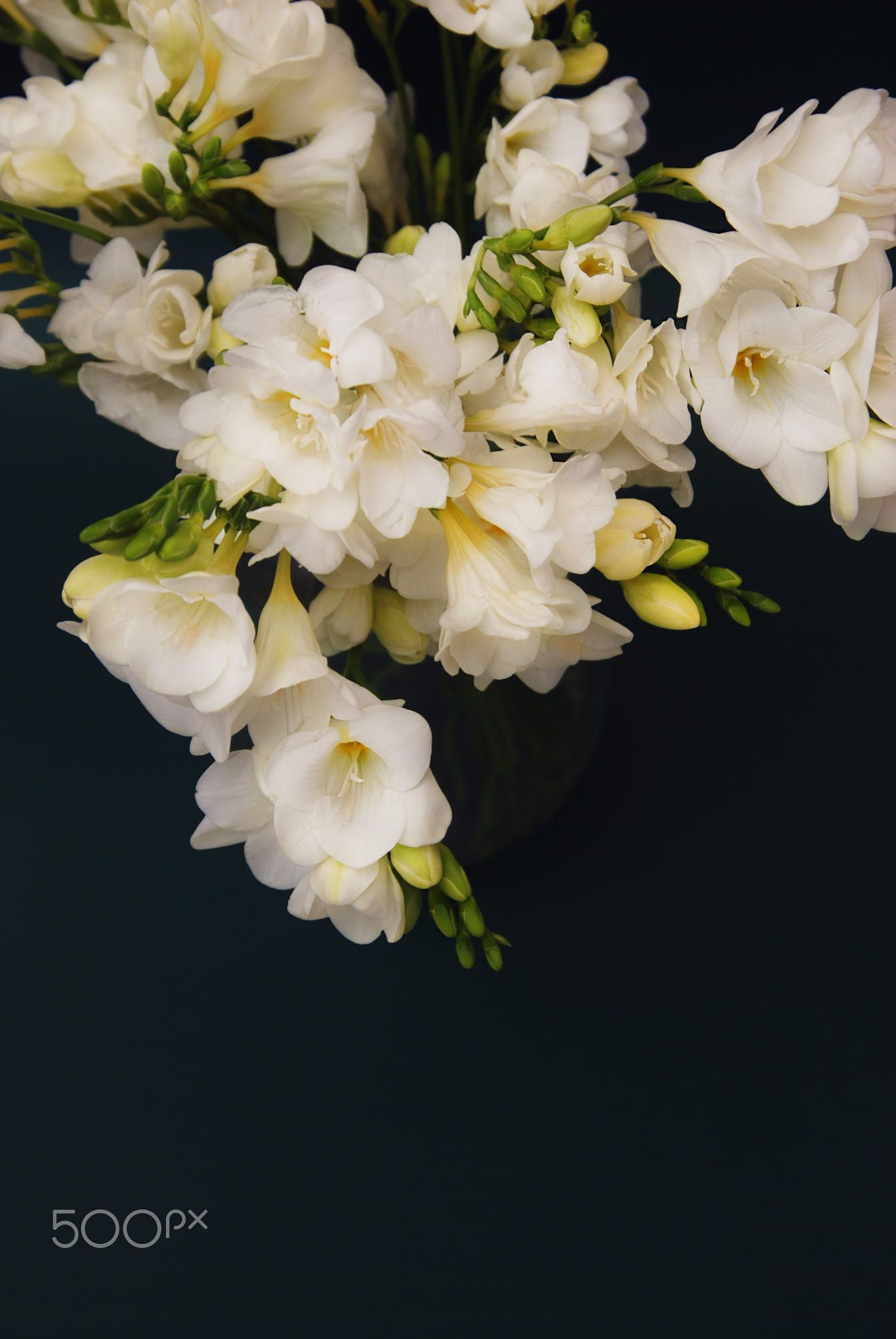 White freesia bouquet of flowers on black background flora and