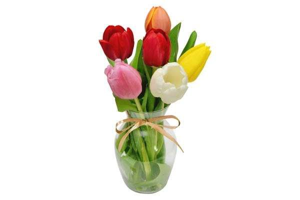 A Tulipa, considerada a flor símbolo da Holanda, também se dá muito bem com a estação mais fria do a... - Foto: Divulgação