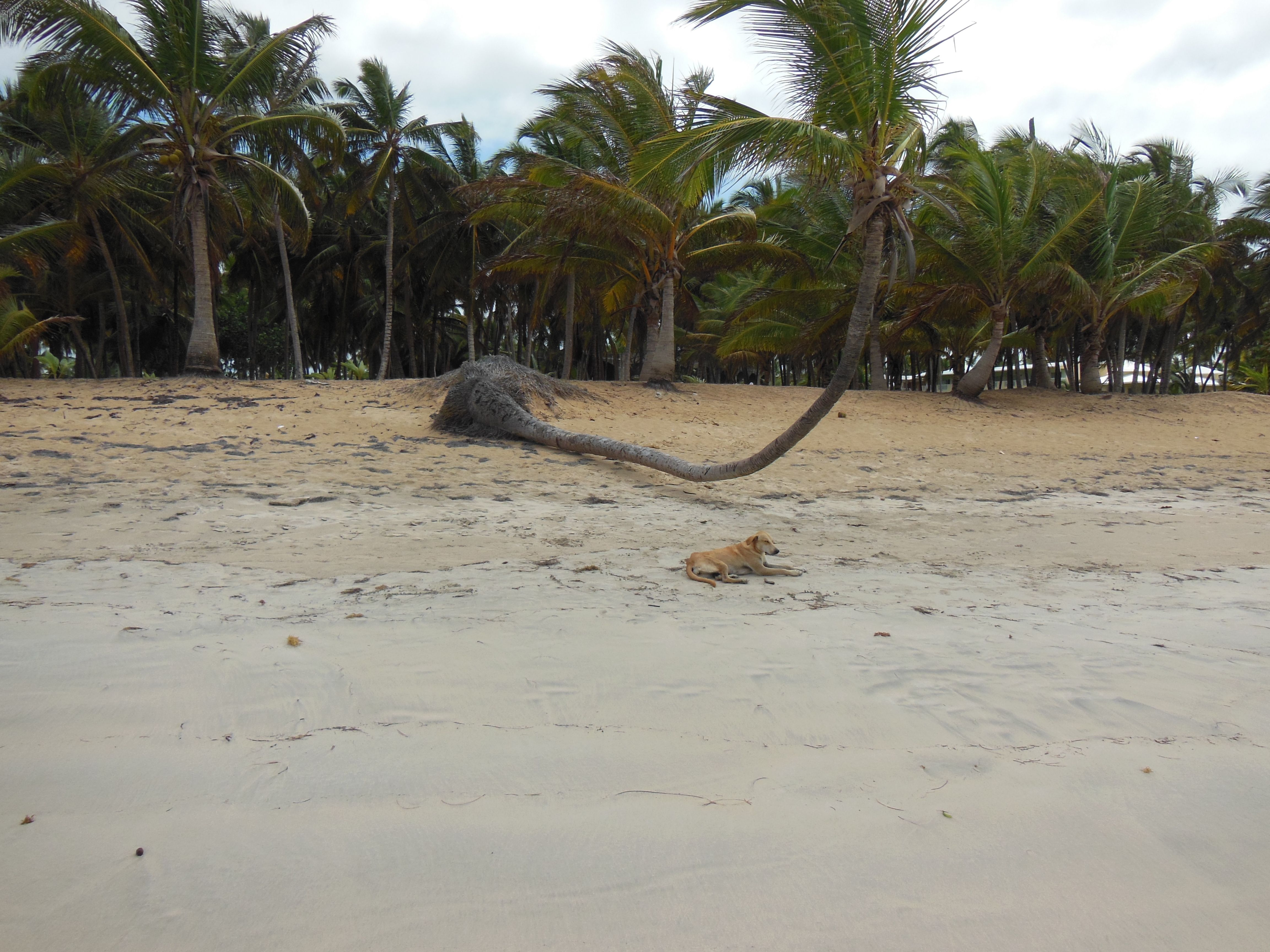 Chilling on the beach in the Dominican...