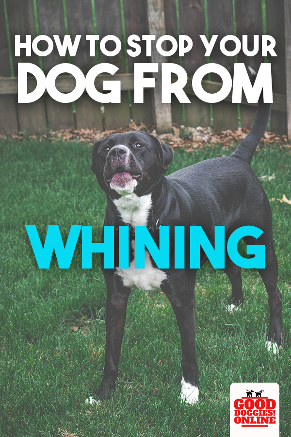 How To Stop Your Dog From Whining Good Doggies Online In 2020 Dog Whining Dog Crying Your Dog