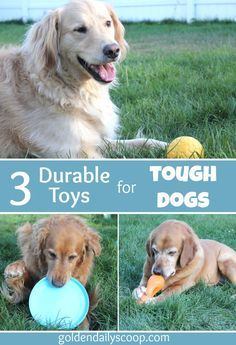 Three Durable Toys For Tough Dogs Interactive Dog Toys Outdoor
