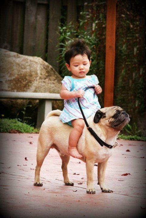 Hop-a-long pug