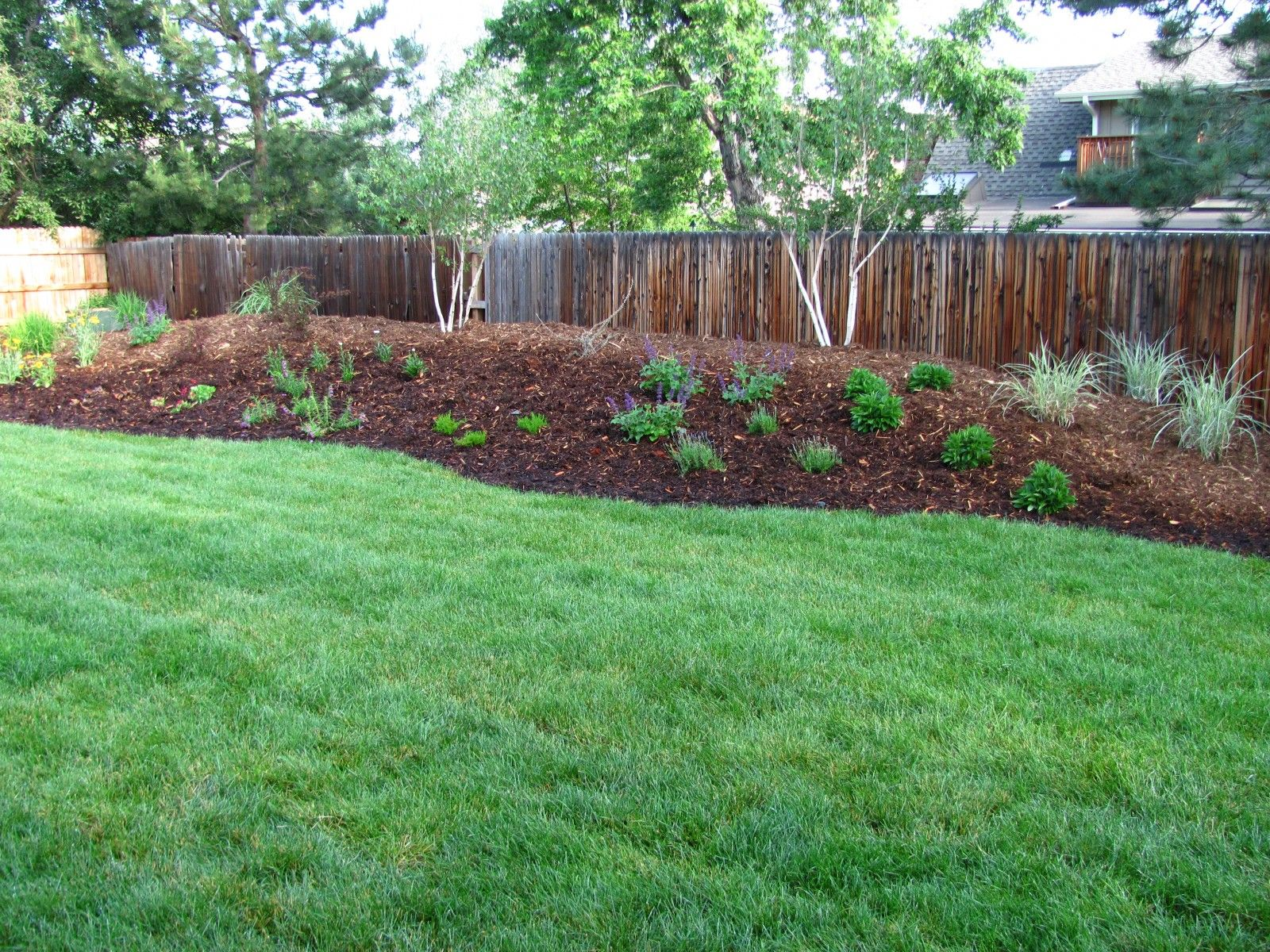 Backyard berms photos google search landscape design for Pics of landscaped backyards