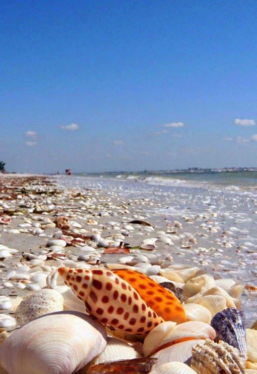 Shell Beach Sanibel Island Florida Usa