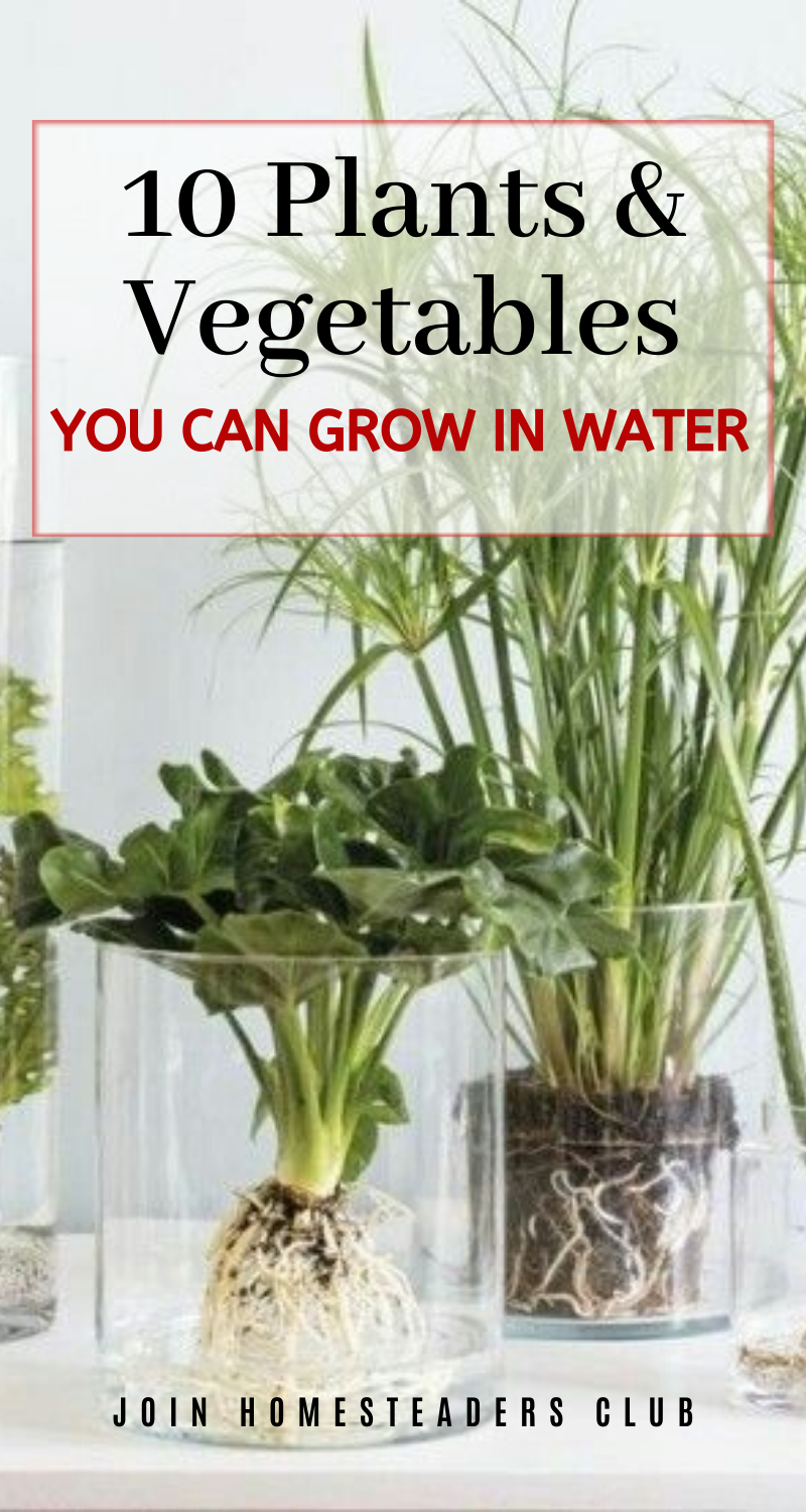 10 Plants And 10 Vegetables To Grow In Water In 2020 Growing Vegetables Plants Best Indoor Plants