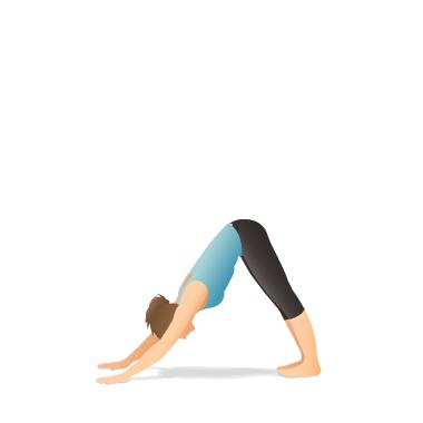 downwardfacing dog adho mukha Śvānāsana  yoga poses