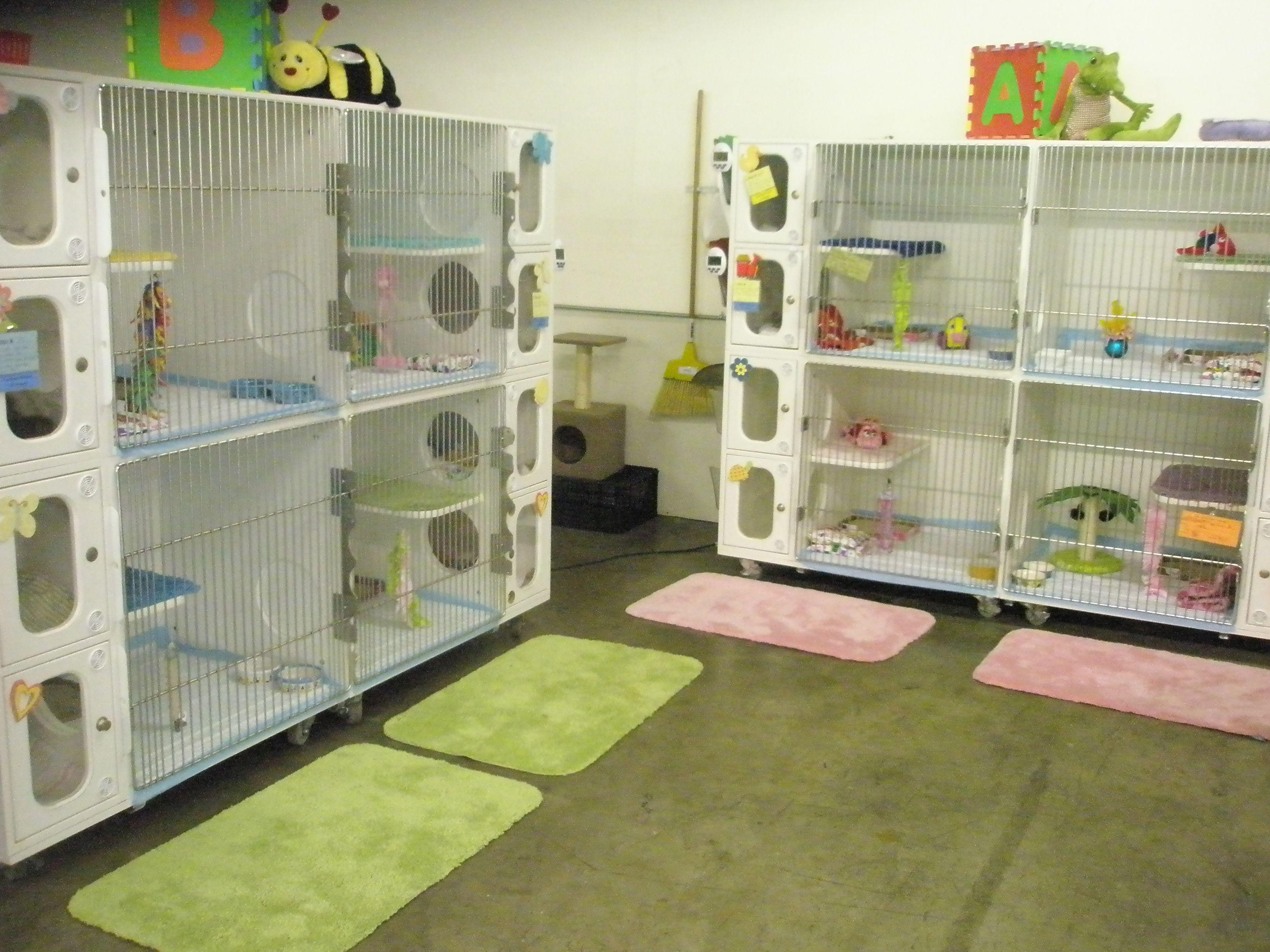 Image Result For Kitten Nursery