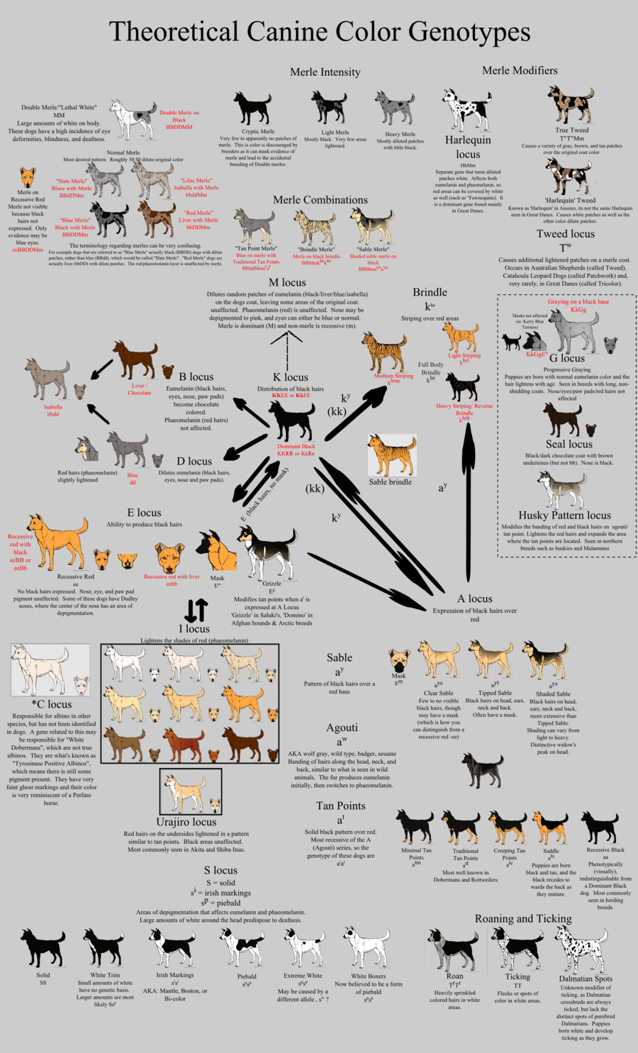 Allele Guide - Canine Color by Xenothere.deviantart.com on ...