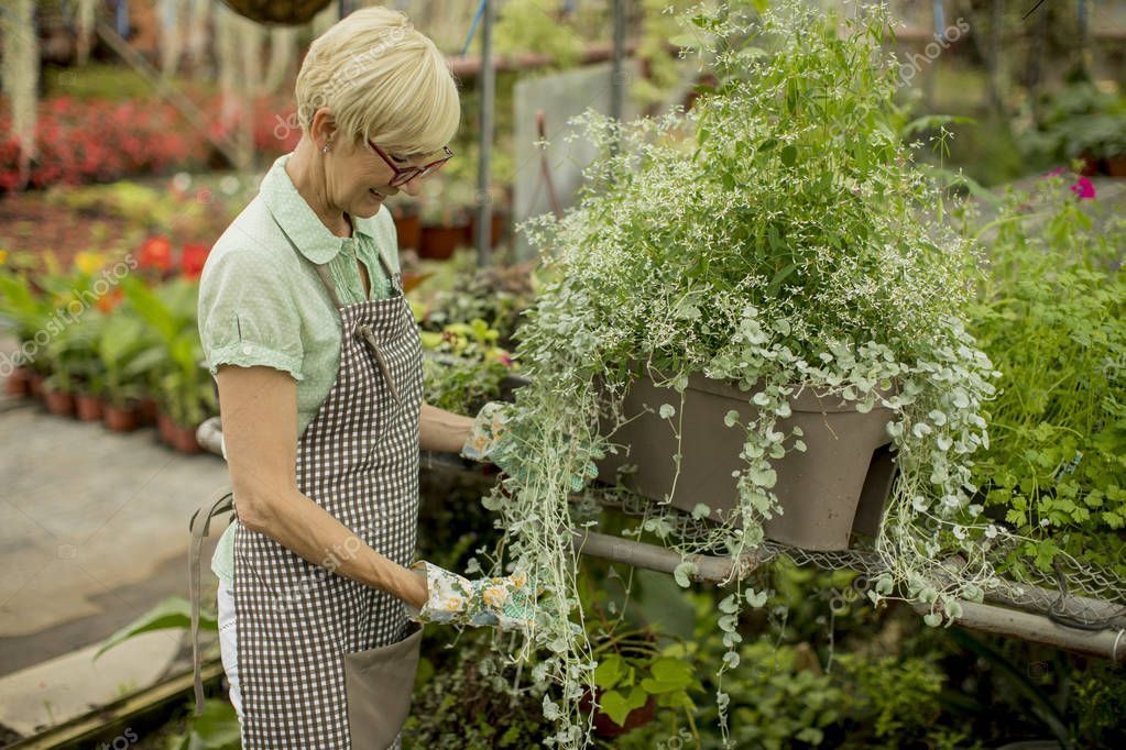 Portrait Senior Woman Working Greengarden - Stock Photo , #ad, #Woman, #Senior, #Portrait, #Working #AD