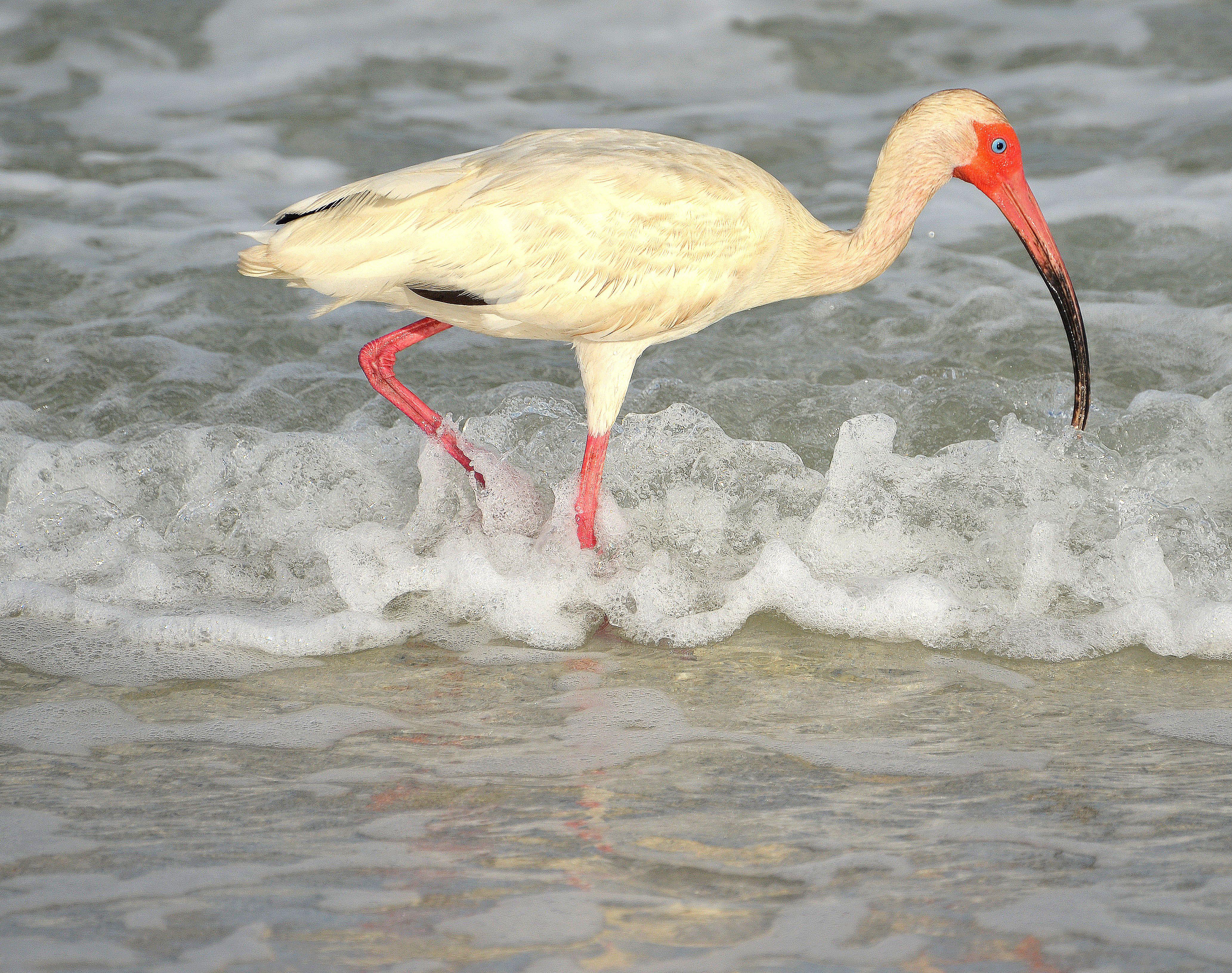 12+ Gulf of mexico animals ideas