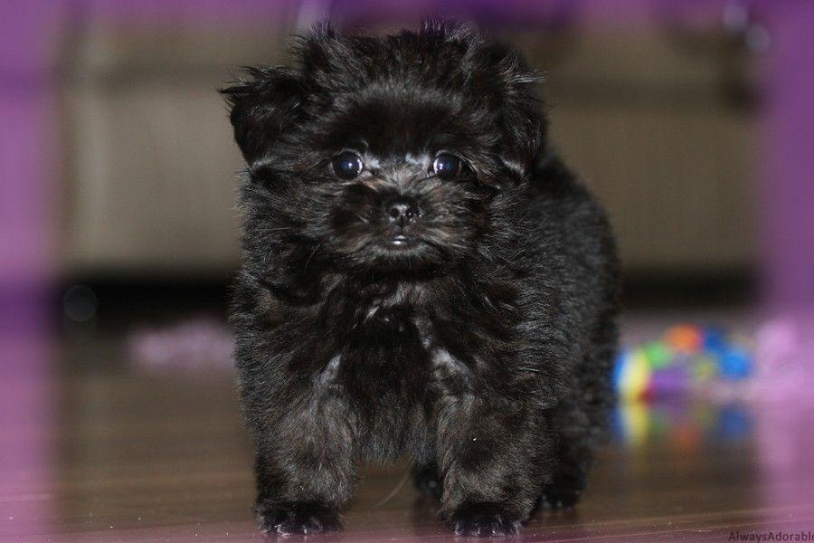 Media Library Always Adorable Mi Kis Wordpress Puppies Puppy Nursery Cute Little Puppies