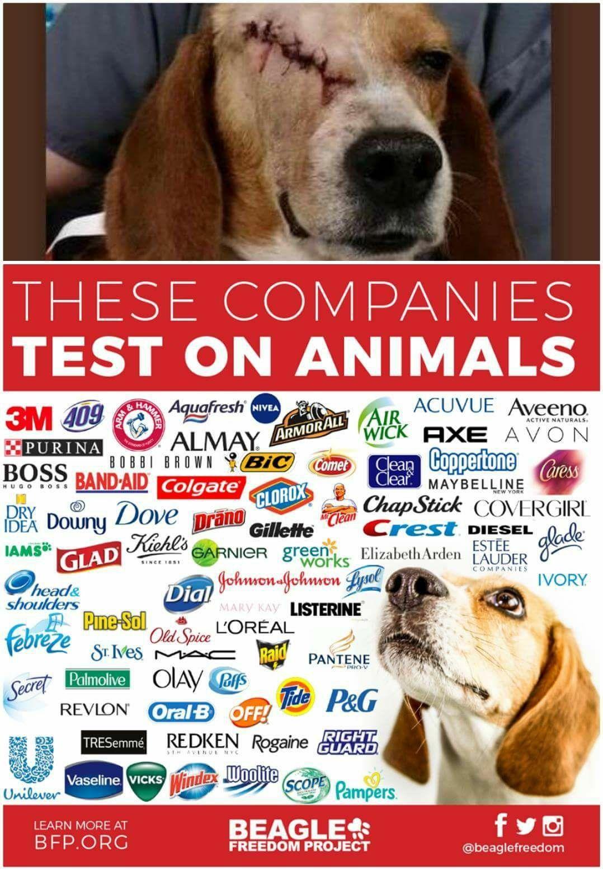 Politics By Terry Stiles Mckee Cruelty Free Brands Aveeno How To Become Vegan