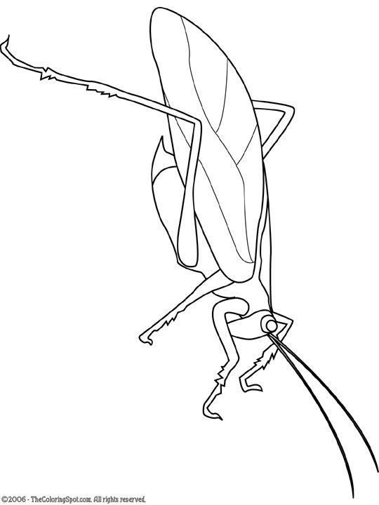 Katydid Jpg 540 720 Pixels Animal Drawings Rodents Drawings
