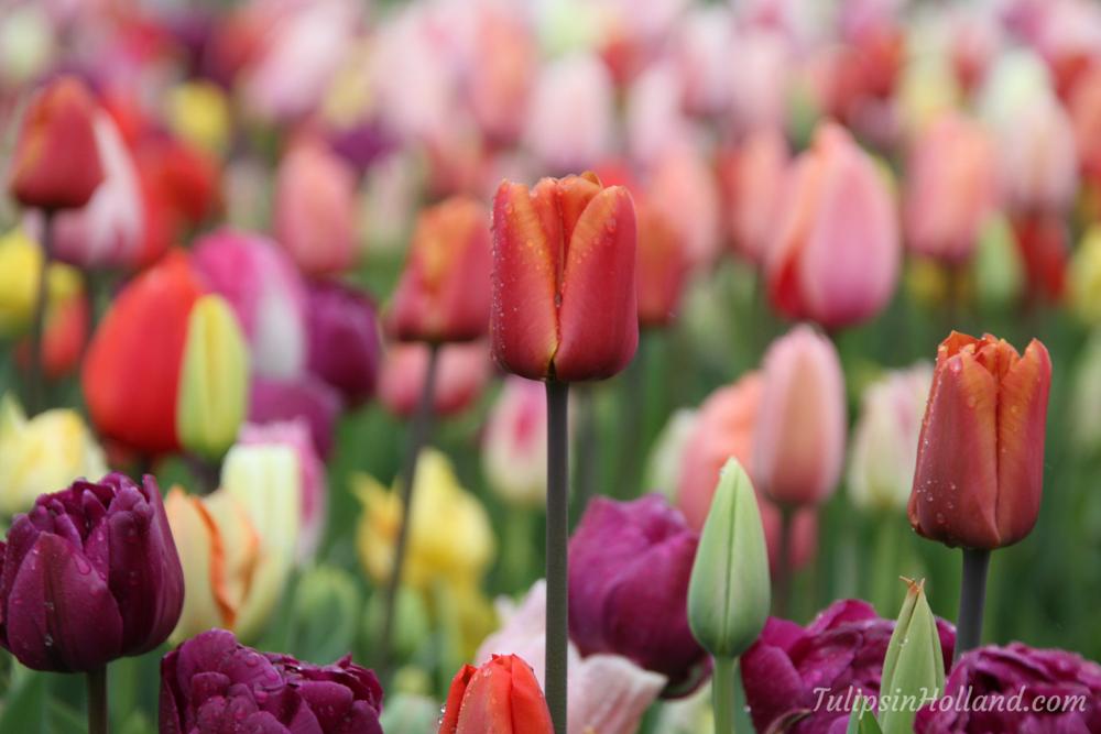 Enjoy your evening! Wishing you a wonderful week full with beautiful flowers!