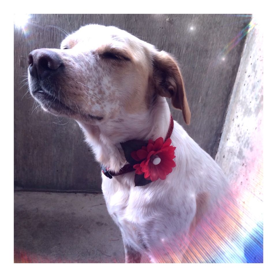 #LUVIT  For #WaggingWednesday we LUV how #TorreySkye is wearing her custom Kitty Katrina LED Daisy Collar Accessory  So cute and such a ZEN moment  Should we add this doggie accessory to our Shop?  And a BIG thank you to GiGiStone Jewelry for sharing this awesome photo - check-out her amazing handmade jewels at ShopGiGiStone.com and use Promo Code - STONED - for 30% OFF  #stoneyourself #dogoftheday #petstagram #petlover #picoftheday #pet #pets #dog #dogs #petlover4life