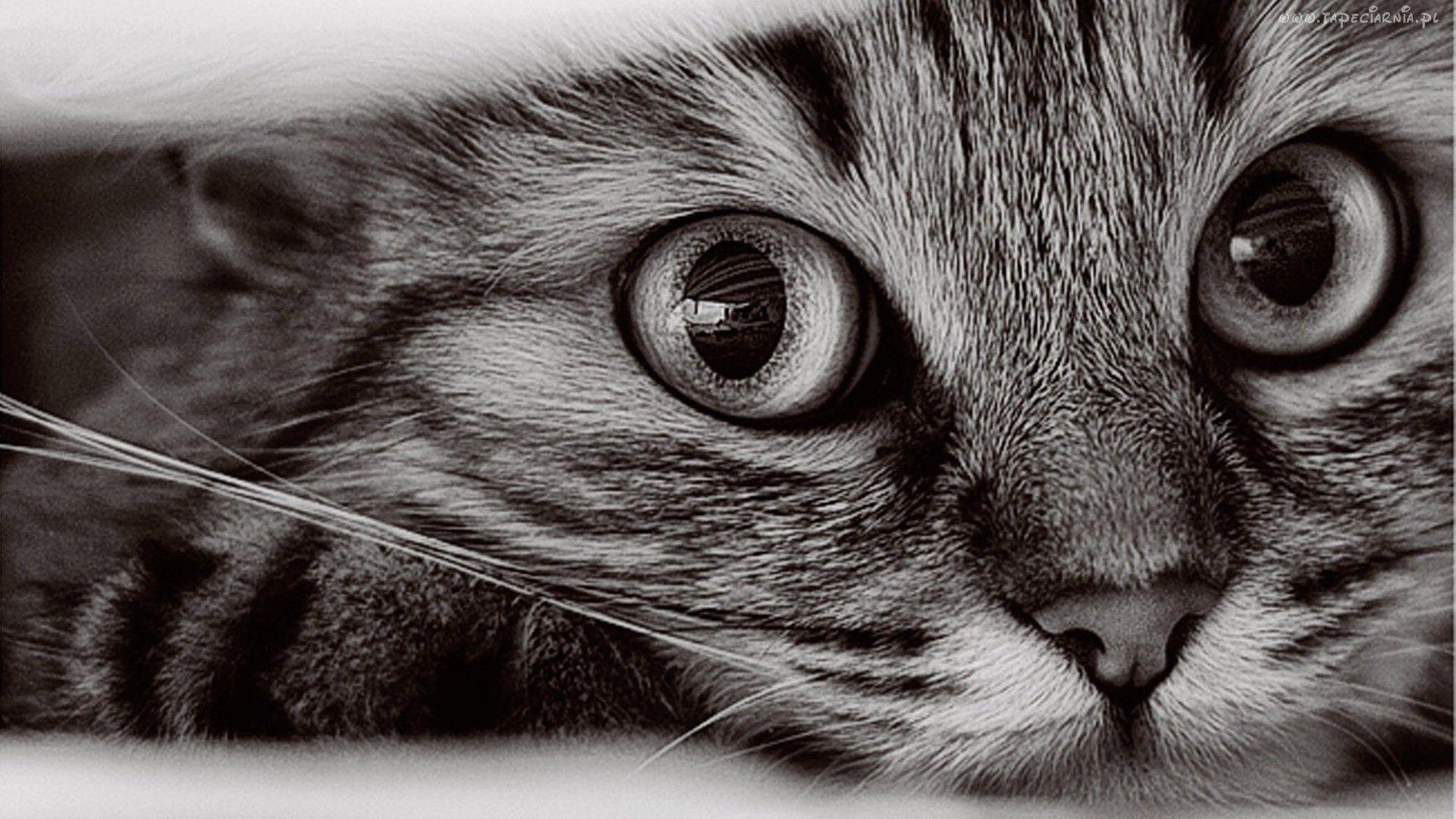 Koty Tapety Hd Szukaj W Google Koty Cat Wallpaper Cats I Animals