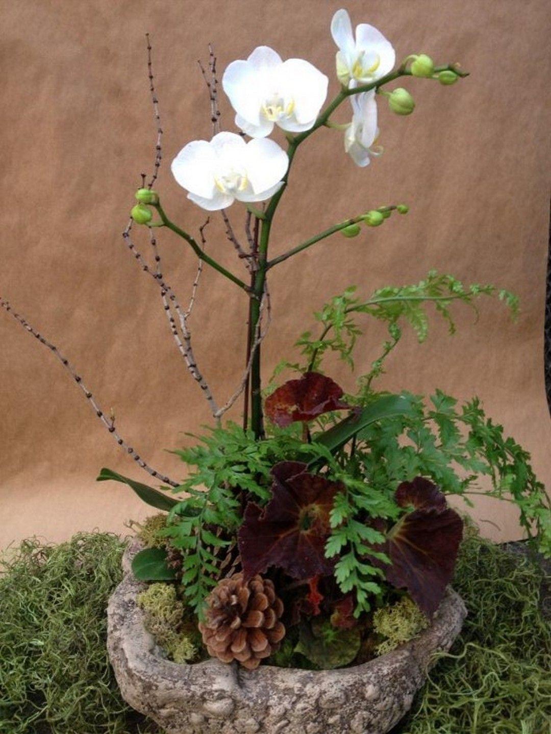 Beautiful Orchid Arrangement Design Background Arranjos De