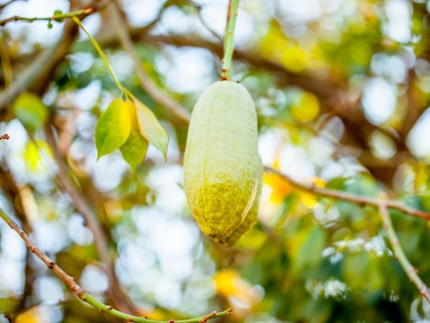 A new way to get Vitamin C? Check out this article on the baobab superfruit from @FoodNetwork.