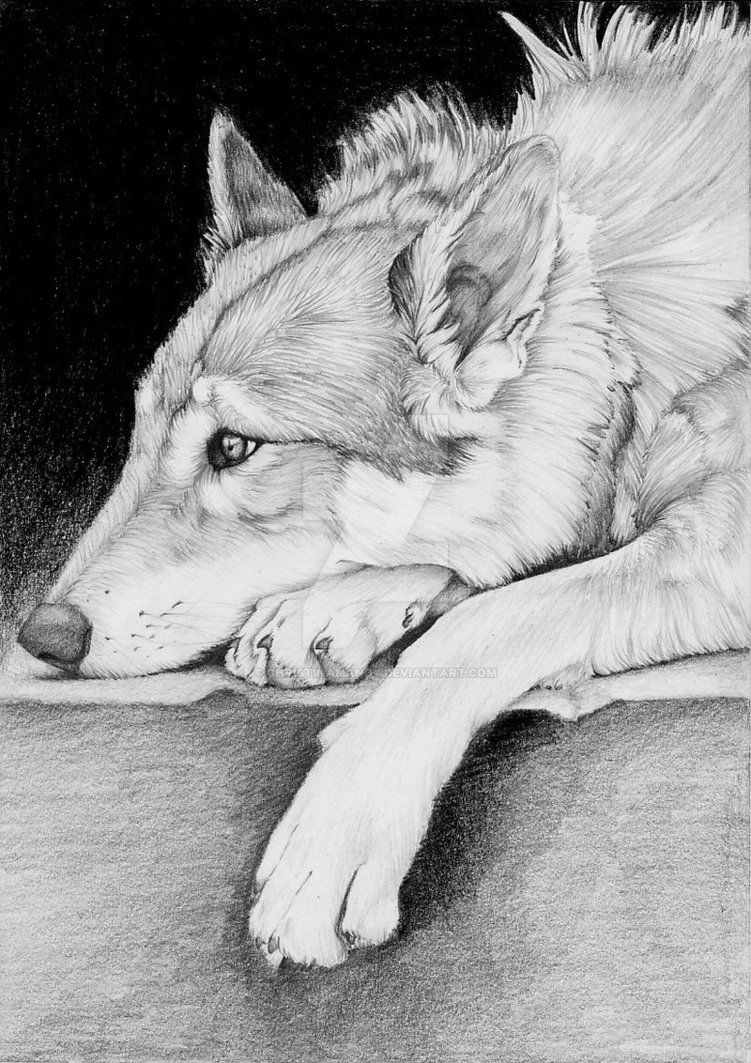 Browsing Animals on DeviantArt | Cool wolf drawings, Wolf ...