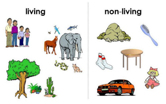 Living And Non Living Things By East Central Ohio Educational