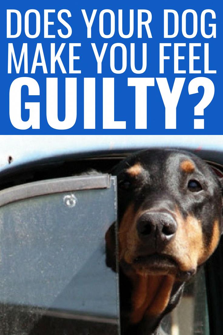 basic dog training instructions #dogtrainingadvice puppy