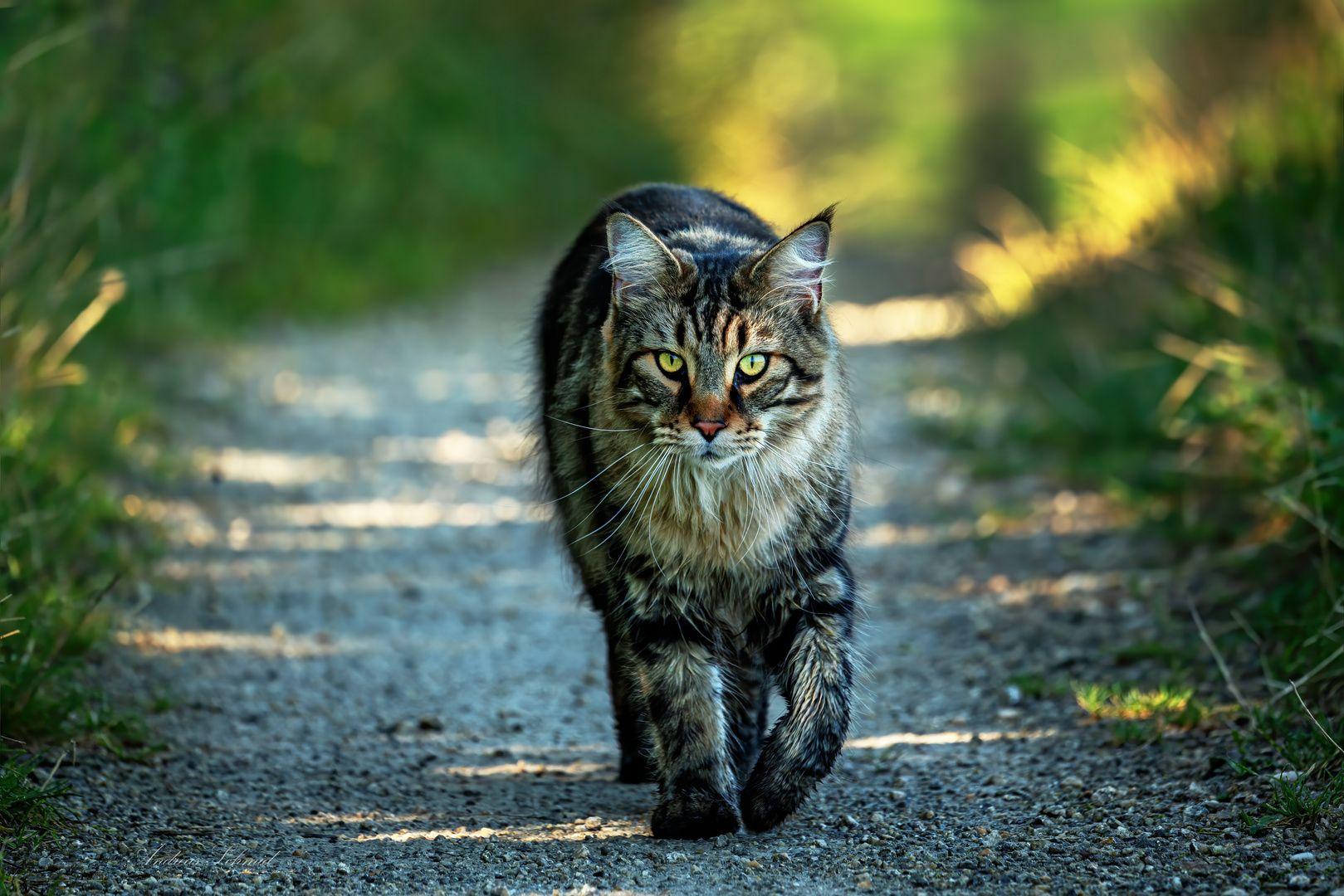 Puschkin Am Nachhauseweg Susse Katzen Ausgestopftes Tier Warrior Cats
