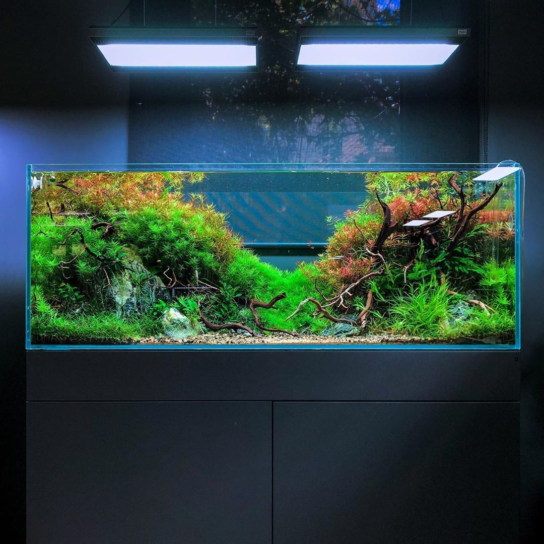 Green Aqua Aquascaping On Instagram Have A Great Weekend To All Closing The Week With This Scape From Filipe Oliveira A Aquascape Aqua Green Scape