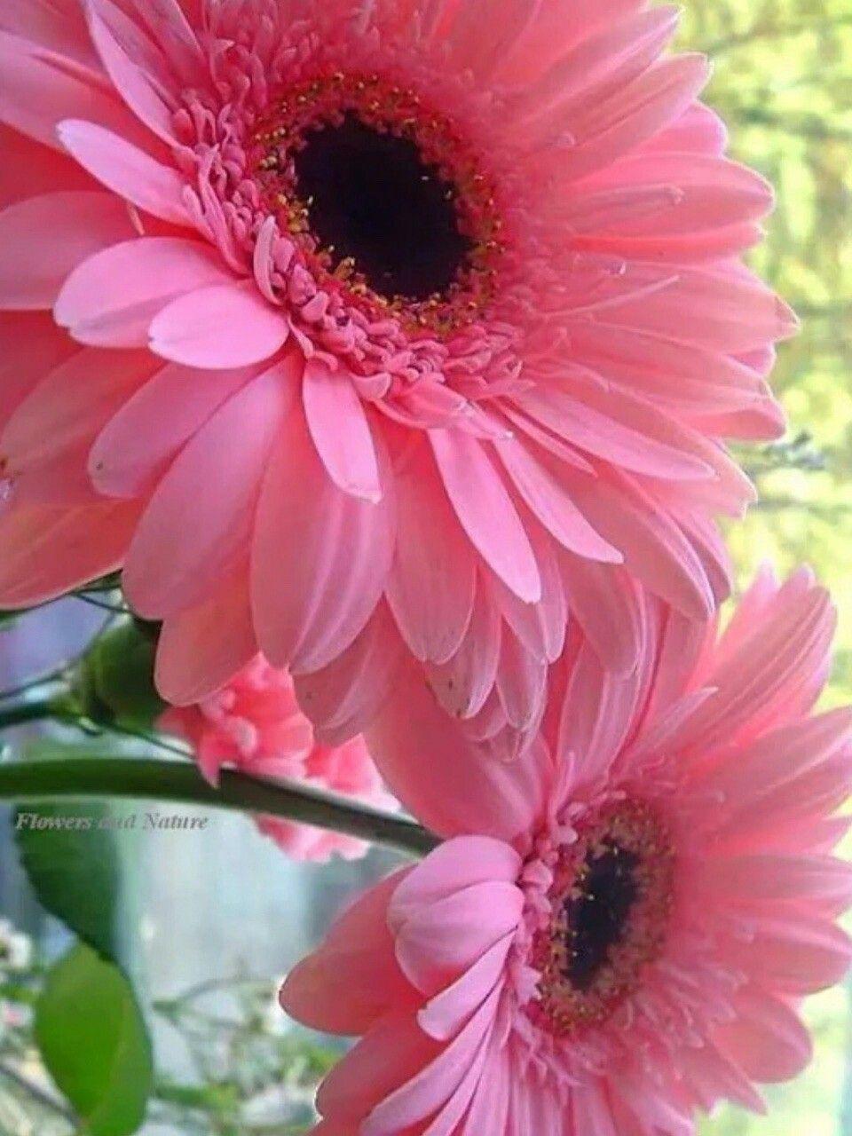 Pin By Muh Al Haddar On Bunga Pinterest Flowers Beautiful