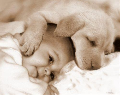 33 Cute Pictures of Puppies and Babies Being Super Cute - Snappy Pixels if you want to smile any time soon take a look :)
