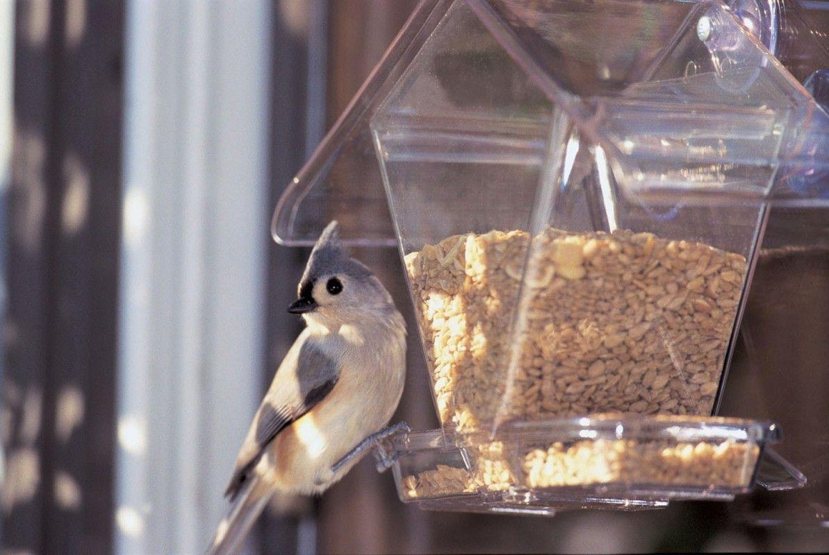 Bird Feeder with Polycarbonate Windows