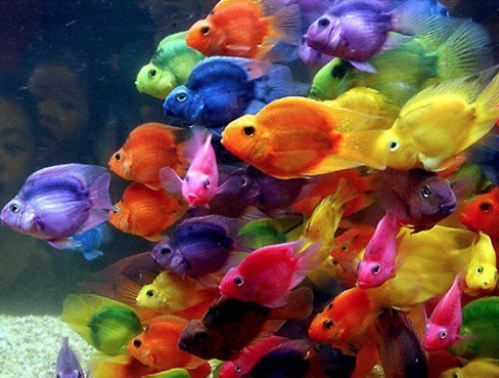 Is This Real Life Colorful Fish Parrot Fish Rainbow Fish