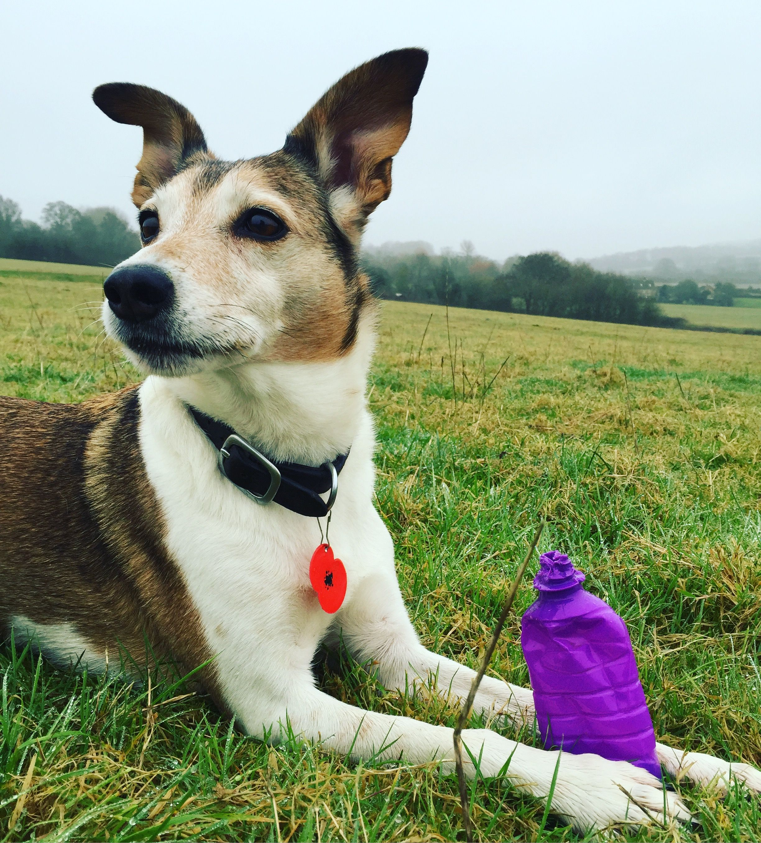 Could Your Dog Be a Litter Picking Womble? Dog care, Dog