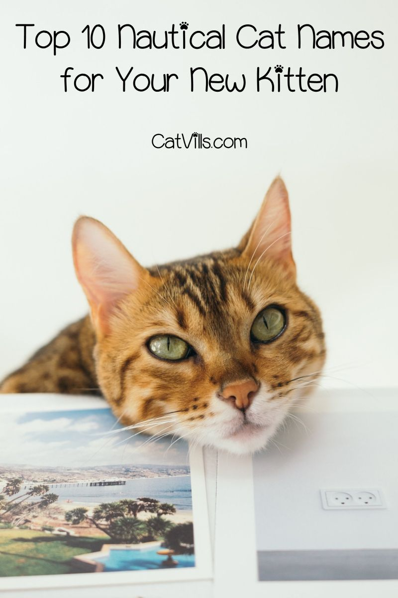 Top 10 Nautical Cat Names For Your New Kitten Catvills Bengal Cat Cat Names Cats
