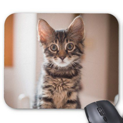 tabby kitten on the table mouse pad rh pinterest com