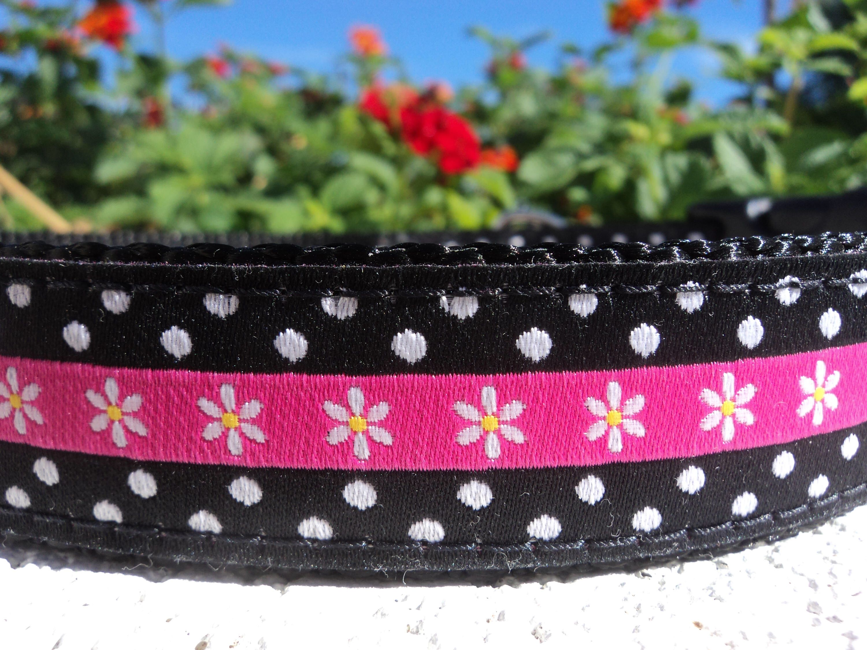 "Dog Collar, Daisy Dot, 1"", Quick Release buckle, or"