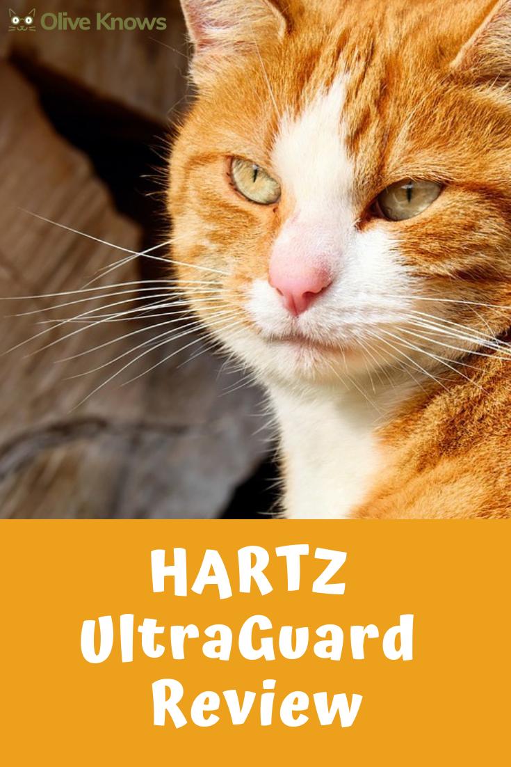 Hartz Ultraguard Review Cat Safety Cat Parenting Cat Fleas