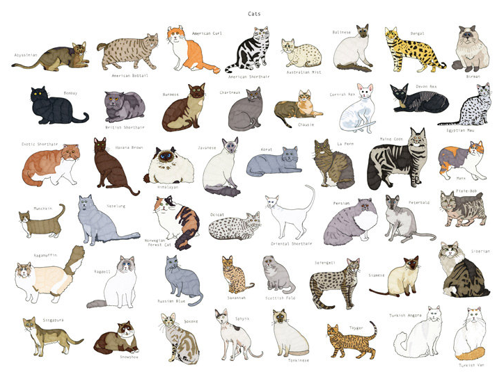 Cat breed chart cats cat breeds cats dogs