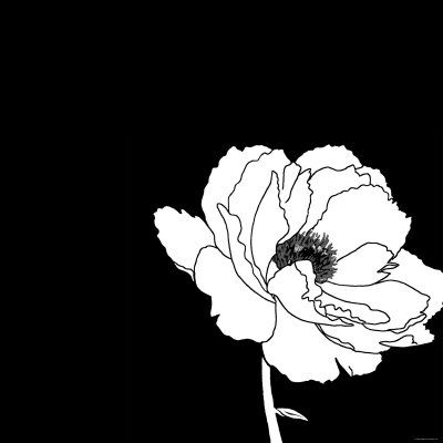 Black and white print with large white flower art print at art com