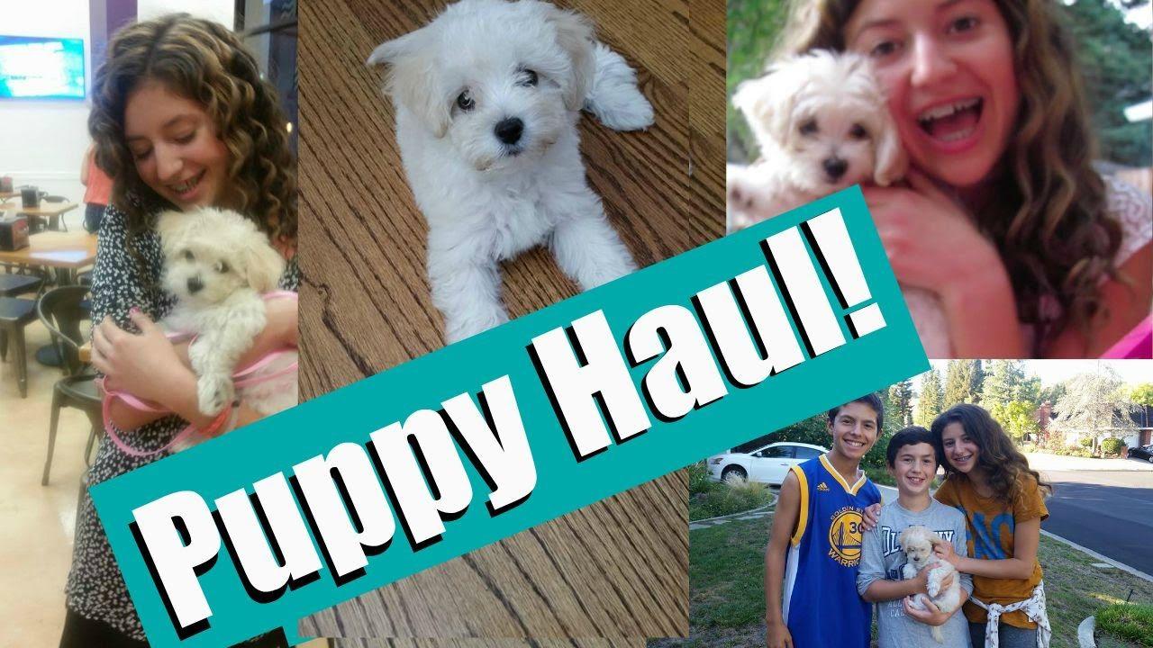 Meet My New Dogpuppy Puppy Haul I Got A Dog Maltipoo