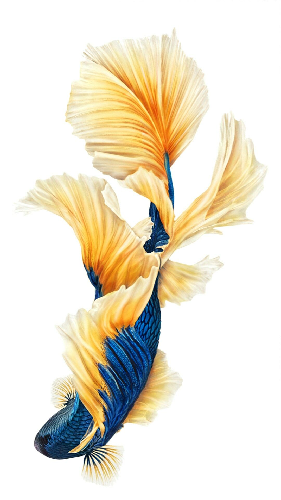 Pin by 喵喵 on 墙纸 Fish wallpaper iphone, Fish wallpaper