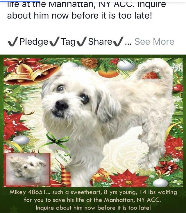 MIKEY NEEDS HELP😥😥 Nyc dogs, Pet adoption, Staten island
